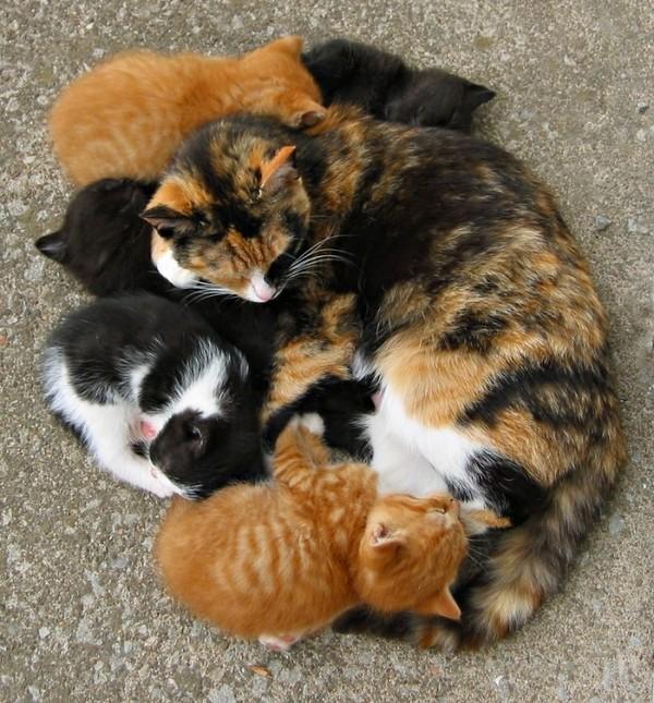 La prolifération des chats errants