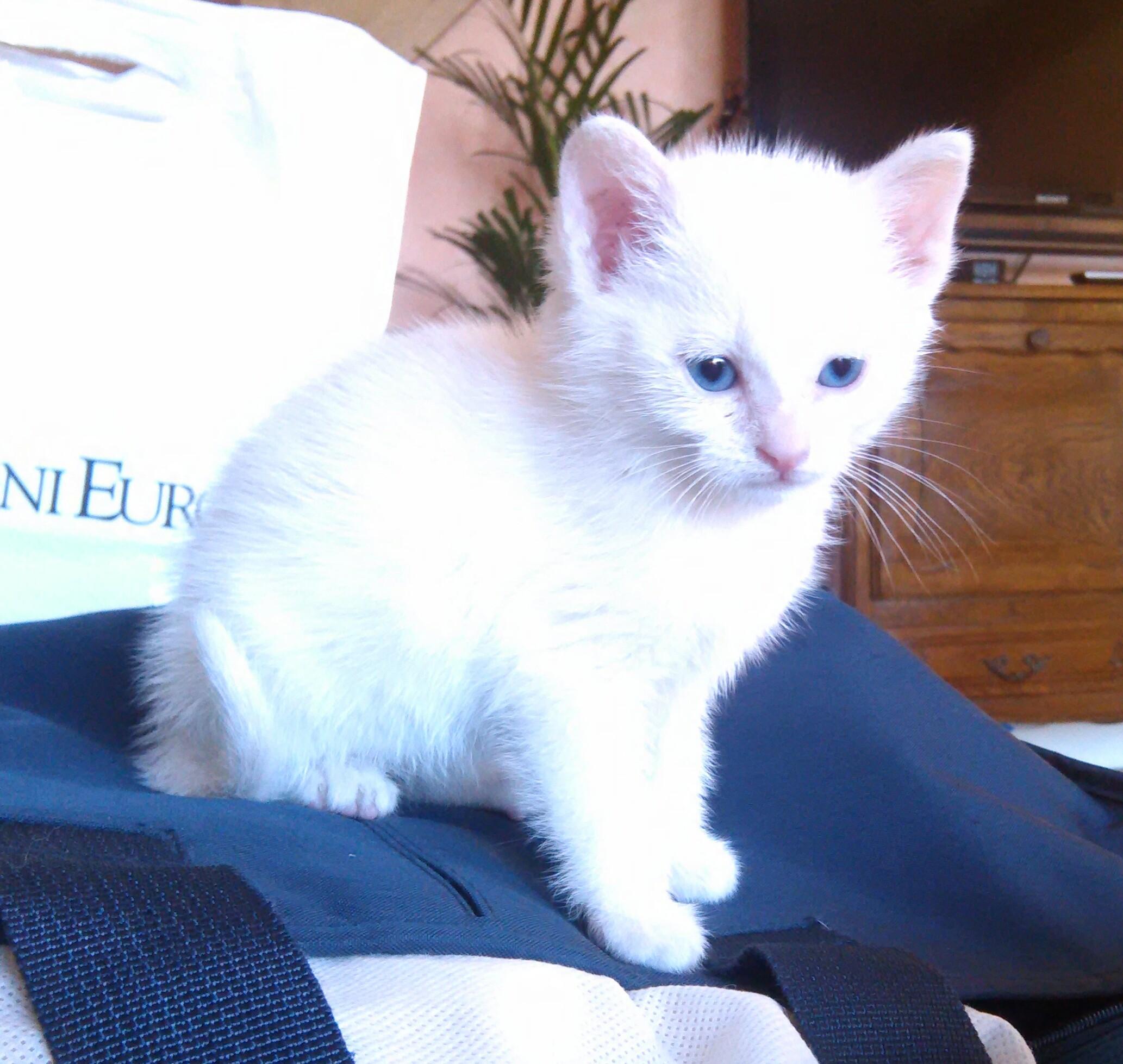chat handicapé adoption
