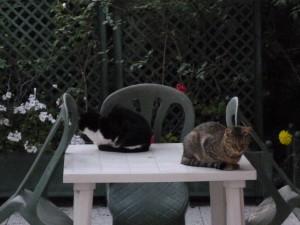 Mimine et Maki POZAS