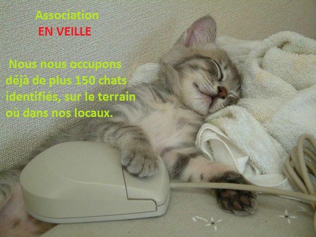 chat-qui-dort- pour le site